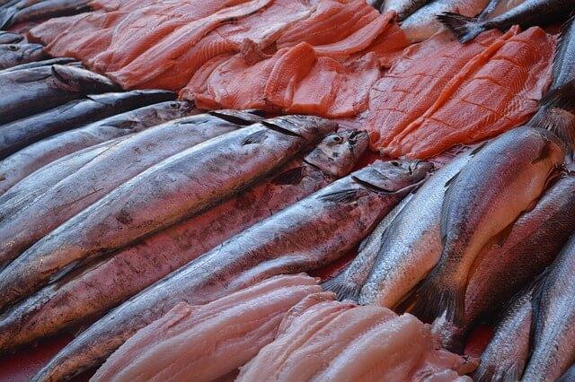 fish-972175_640-1