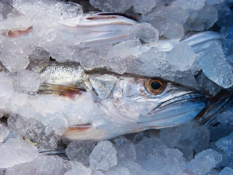 pescaderia miciudad 768x576