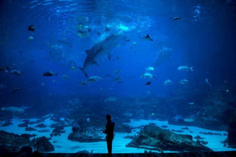 acuario gijon miciudad 768x512