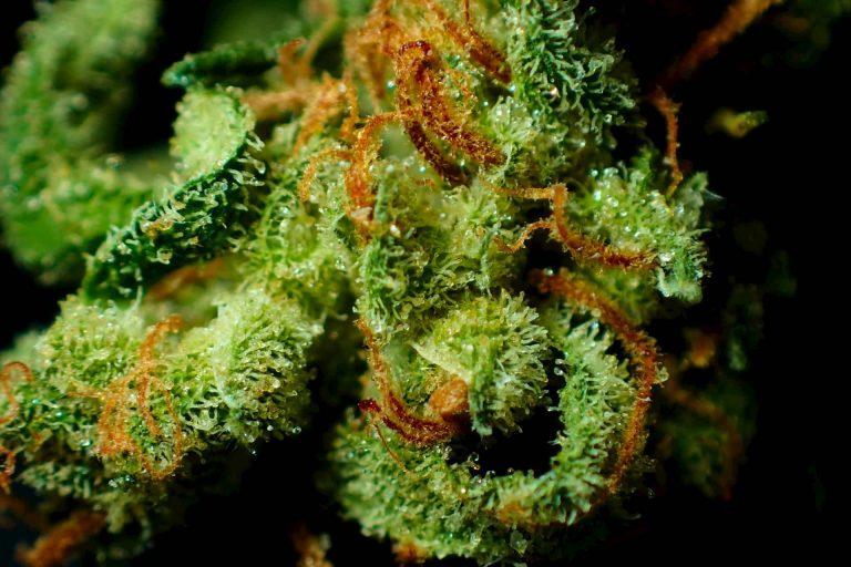 marihuana resina miciudad 768x512